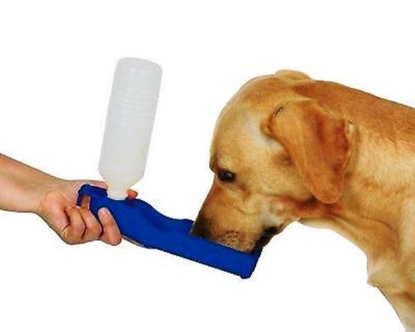 Borraccia per cani